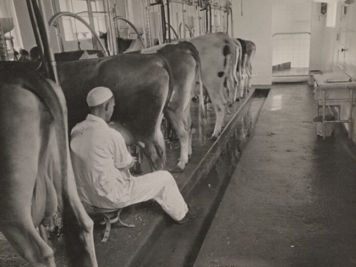 automatic milking systems
