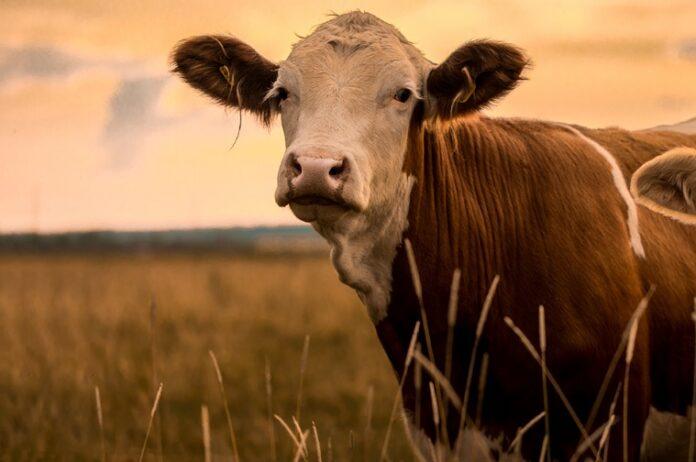 Precision Livestock Farming (PLF)